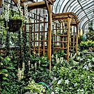 The Conservatory by Robin Black