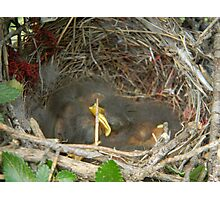 Three Baby Birds Asleep Photographic Print