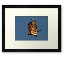 1008111 Red Tailed Hawk  Framed Print