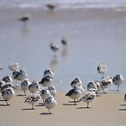 One-legged Shorebirds by Robin Lee