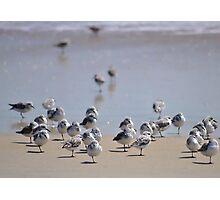 One-legged Shorebirds Photographic Print