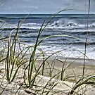 Sea Oats by Robin Lee