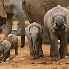 Baby African Elephants II by naturalnomad