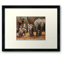 Baby African Elephants II Framed Print