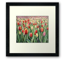 From The Nature's Palette Framed Print