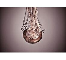 Jellies Invasion at the Baltimore Aquarium Photographic Print