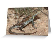 Ctenophorus pictus_Yunta Area_SA Greeting Card