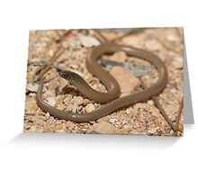 Delma australis_Coober Pedy_SA Greeting Card