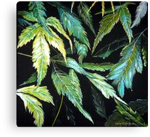 Maple Leaves - After the Rain  Canvas Print
