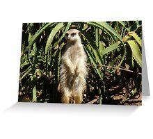 Meerkat Curiosity Greeting Card