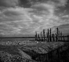 Woodhenge by Gary Busch
