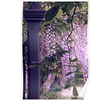 """Peeking at the Garden Path..."" Poster"