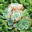 Succulent Glory by ScenerybyDesign