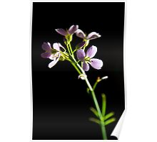 Cuckoo Flower   Poster