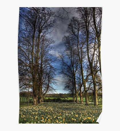 Daffs and Trees  Poster