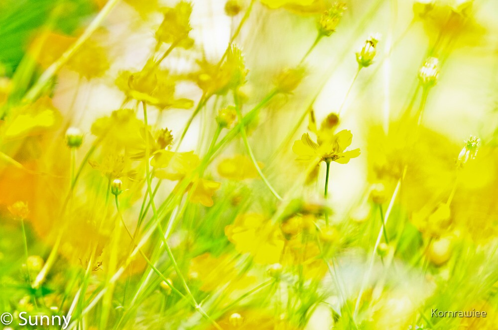 If you love yellow field... by Kornrawiee