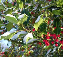 Holly Branch by esharp