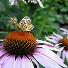 Summer In The Garden by Elizabeth Burton