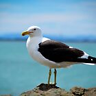 Black Backed Gull by Deborah Clearwater