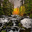 Its What You See That Counts by Charles & Patricia   Harkins ~ Picture Oregon