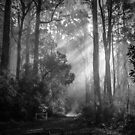 Toolangi State Forest 2  by Christine Wilson