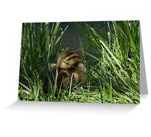 Mallard Duck Duckling Greeting Card