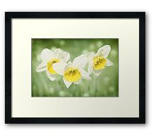 Enchanted Spring Daffodils Framed Print