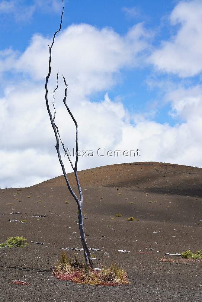 Dead tree in ashes by Alexa Clement