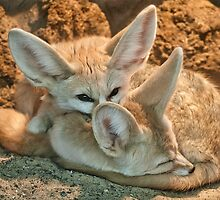 Fennec Fox by John Dickson