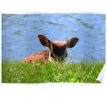 Little Shy One  ( Wild Life Preserve ) Poster