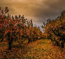 Fall Colors #44567 by Charles & Patricia   Harkins ~ Picture Oregon