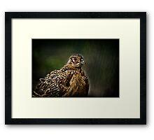 Lady Pheasant Framed Print