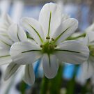 Ladie's in white.... by supernan