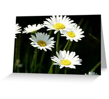 The Perfect Daisies Greeting Card