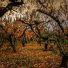 Fall Colors #7768 by Charles & Patricia   Harkins ~ Picture Oregon