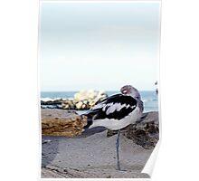 Little Bird Nap Poster