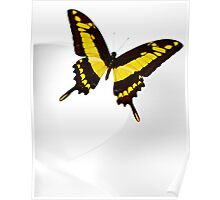 Butterfly on White Poster