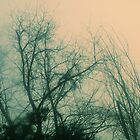 fog in the trees 1 by Jamie McCall
