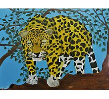 South american Jaguar on the hunt Photographic Print
