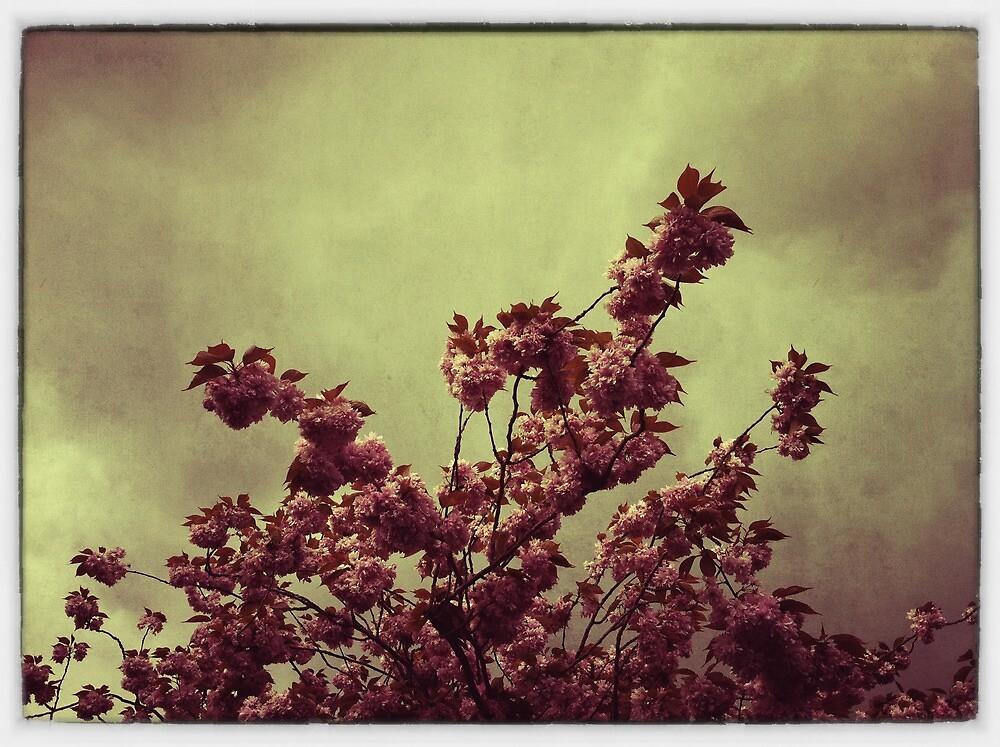Blossom by Tony Day
