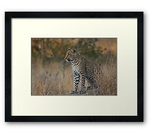 Young Leopard Framed Print