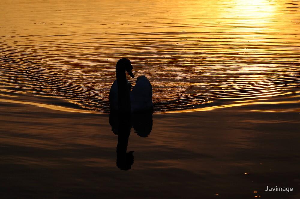 Golden grace by Javimage