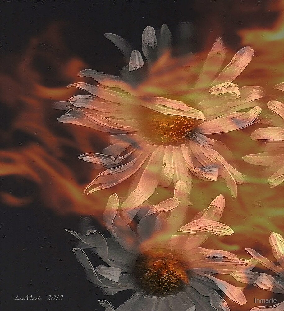 Leaping from the flames... by linmarie