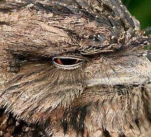 Night Owl by Bevlea Ross