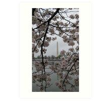 Cherry Blossoms in Washington DC Art Print