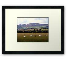 Wetlands Wild Geese Framed Print