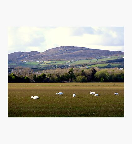 Wetlands Wild Geese Photographic Print