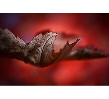 Leaves of Autumn I Photographic Print