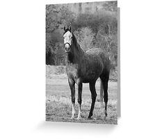 Dapple Gray Greeting Card