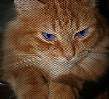 Mr. Blue Eyes by DebbieCHayes